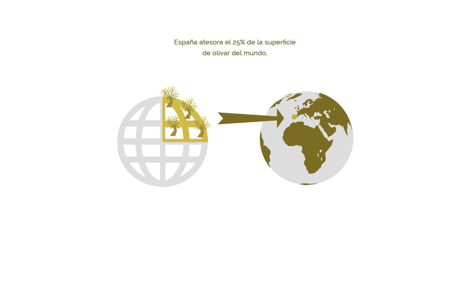 España atesora el 25% de la superficie de olivar del mundo