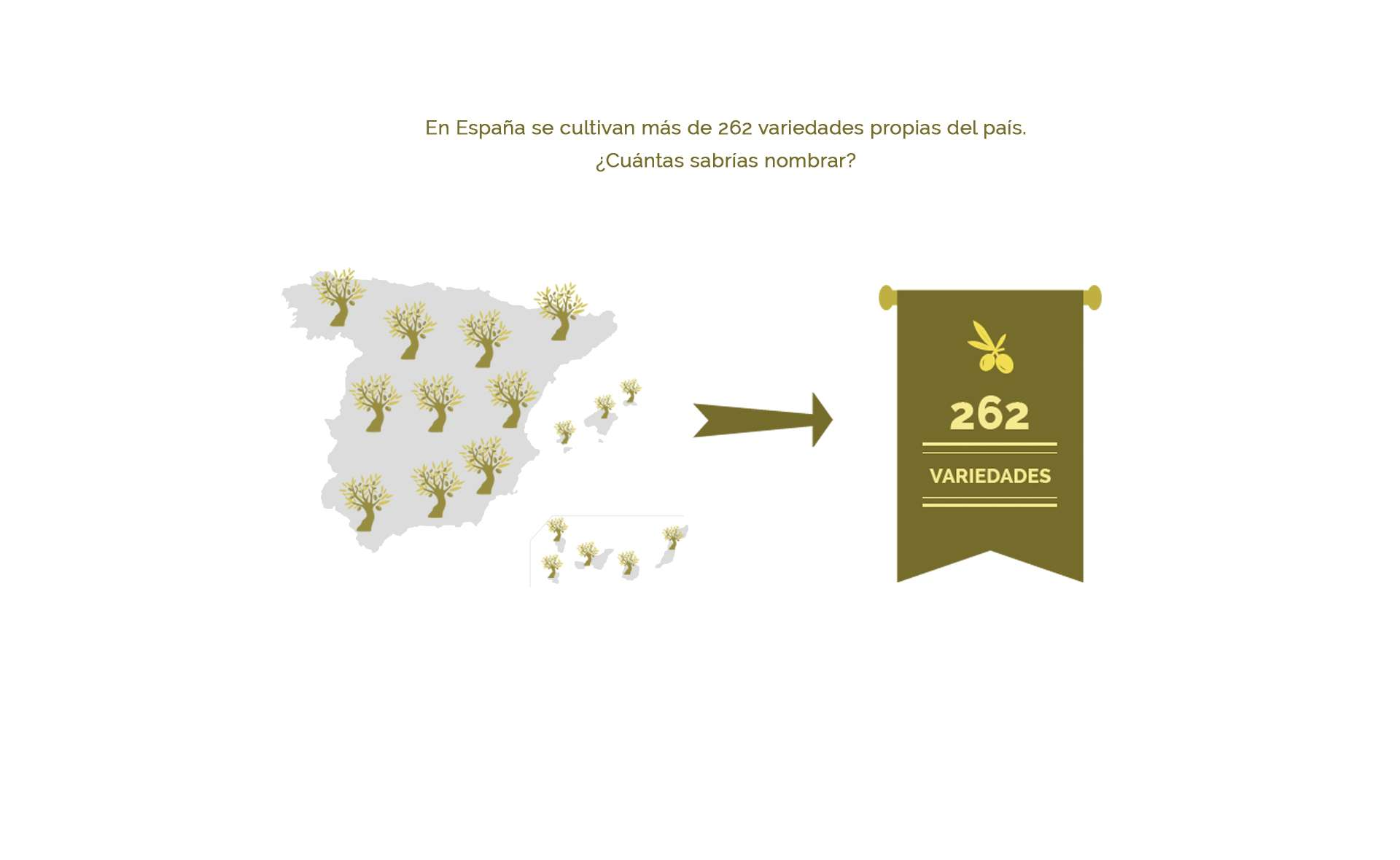 262 variedades del aceite de oliva cultivadas en España