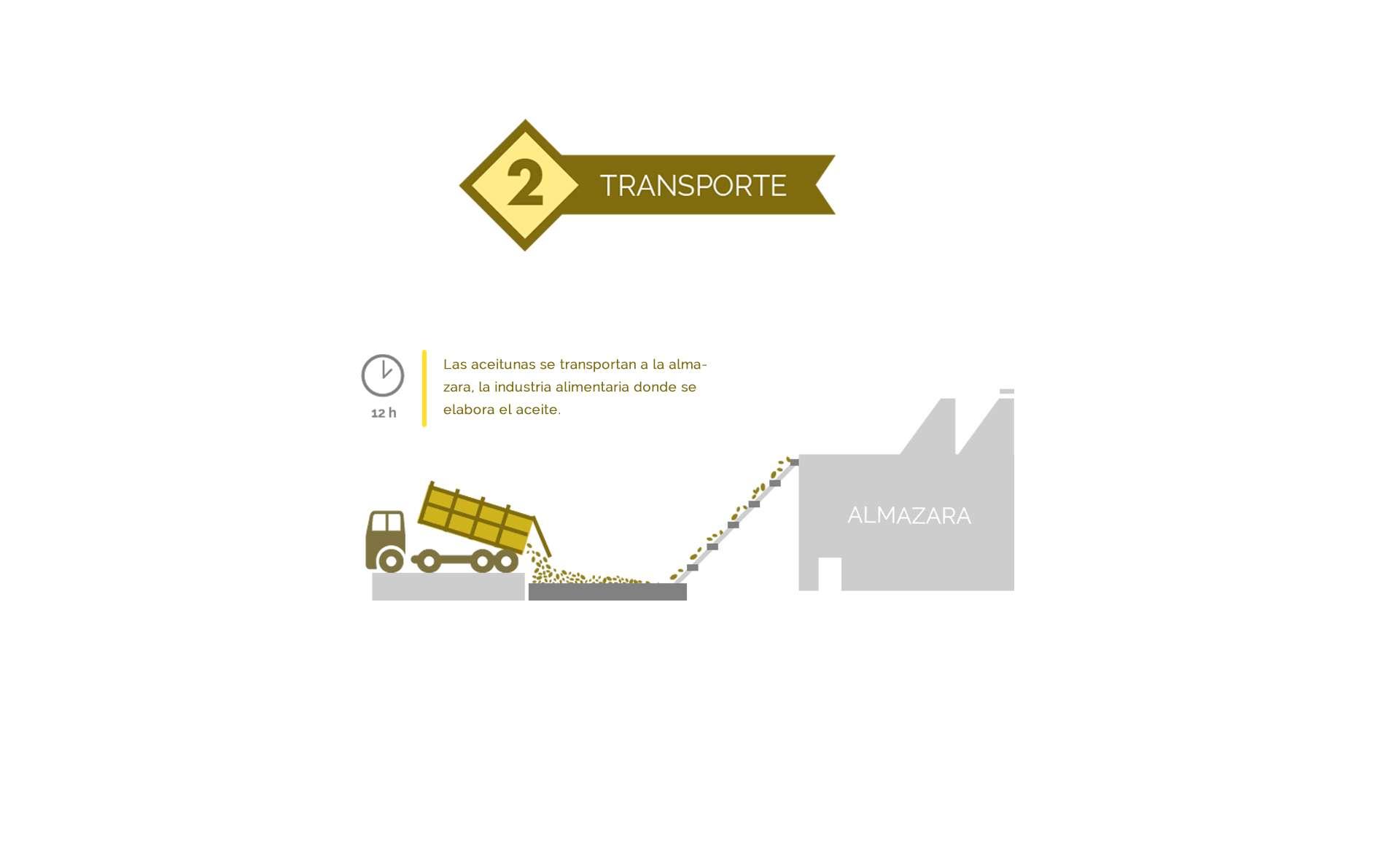 transporte de las aceitunas a la almazara