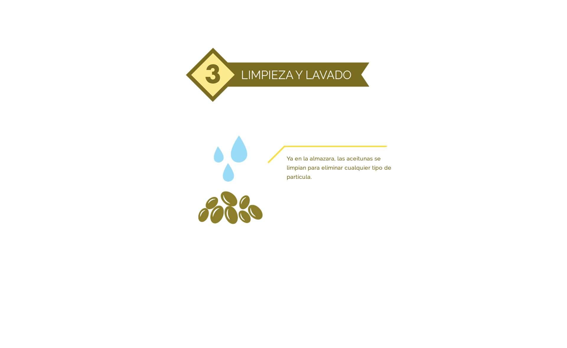 limpieza y lavado del aceite de oliva