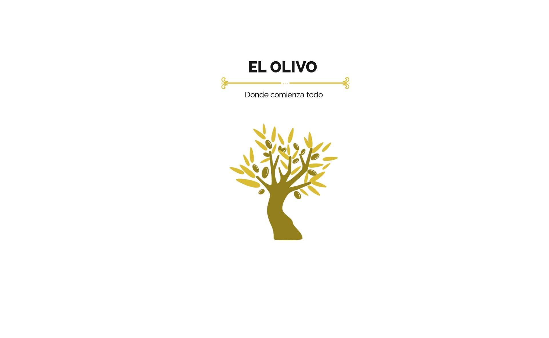 olivo el árbol de donde proviene aceite de oliva