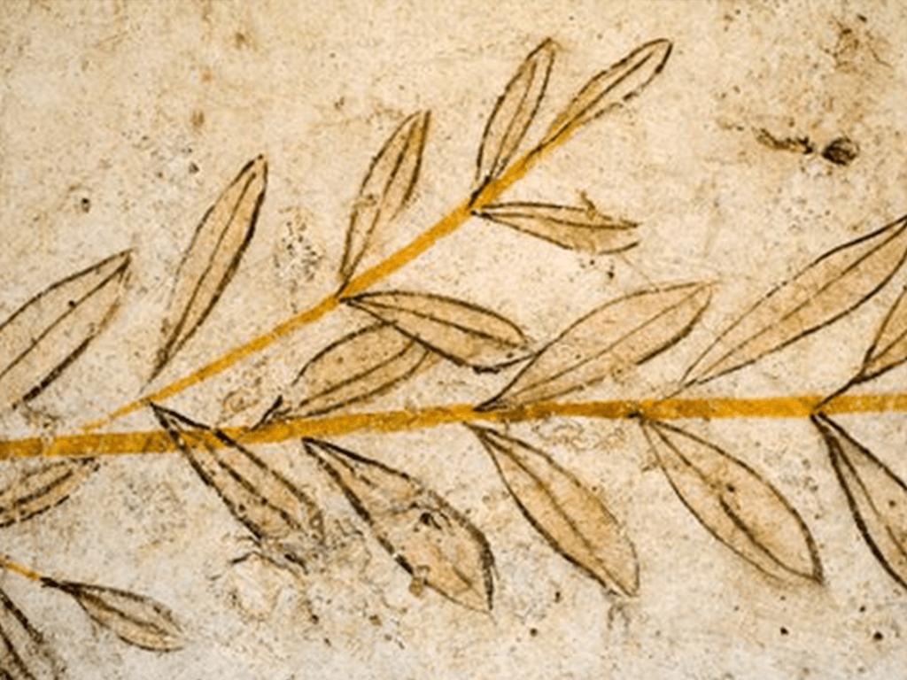 Оливковое масло в истории человечества