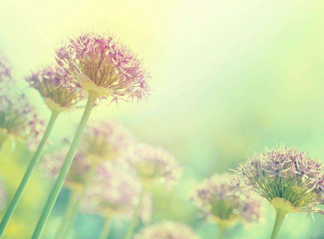 Flores rosas en campo con tonos verdes