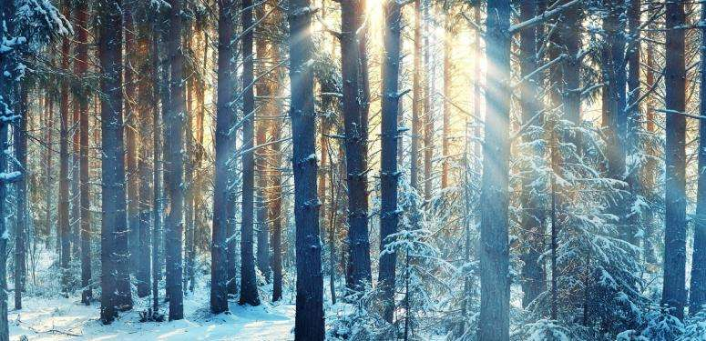 Bosque de árboles con nieve