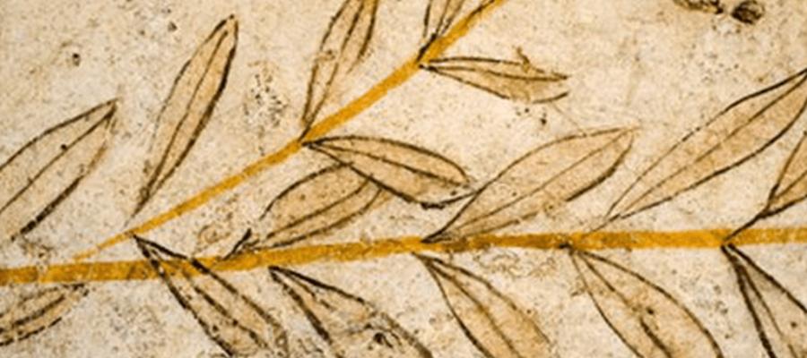El Aceite de Oliva en la historia de la humanidad (I)
