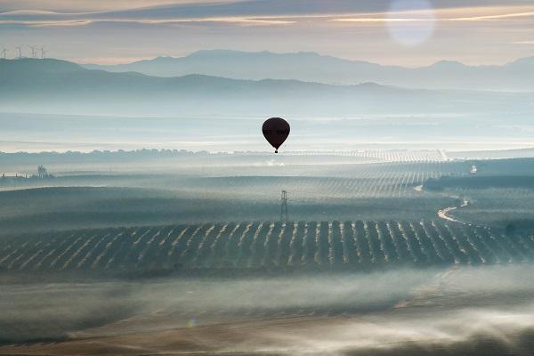 Desde un globo pudieron ver el mar de olivos desde una nueva perspectiva
